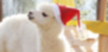 alpaca world-3.jpg