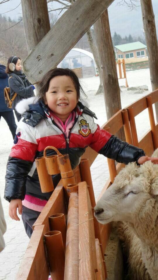 Daeguanryeoung-Sheep Farm-2.jpg
