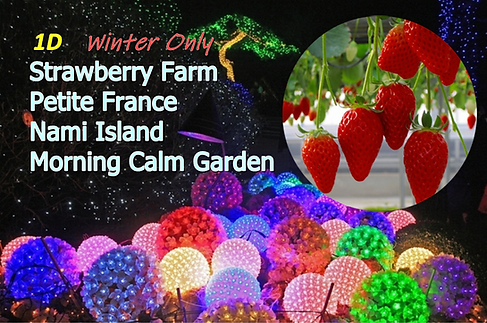 1-cover-morning calm garden-festival-2-c
