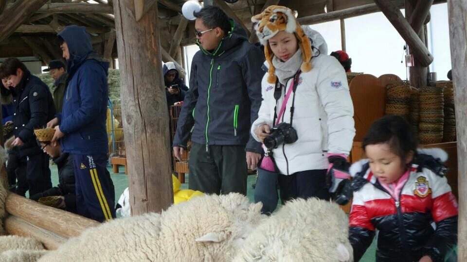 Daeguanryeoung-Sheep Farm.jpg