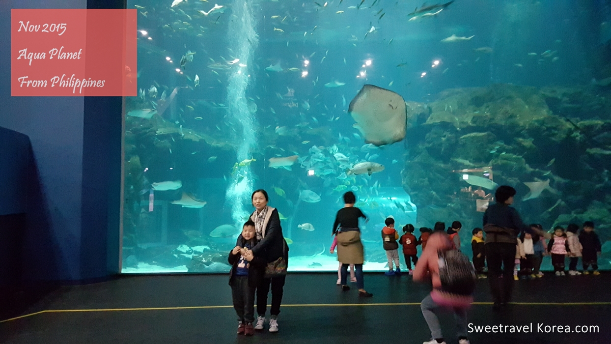 2015-nov-philippines-Korea Tour- Aqua planet (2).jpg