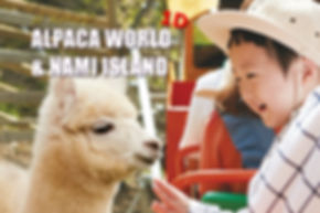 1-cover-alpaca world-nami island-tour.jp