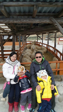 Daeguanryeoung-Sheep Farm-1.jpg