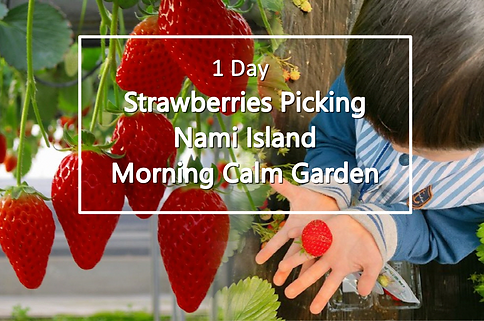 1-cover-strawberry-nami-morning-tour-2.p