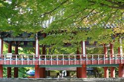 Korea Autumn - Najangsan and Jeonju Tour from Philippines (5)--.jpg