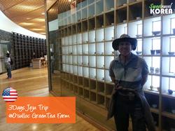 Jeju island tour-Osulloc-greentea-farm.png