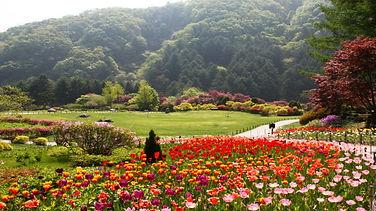 morning calm garden.jpg