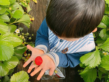 picking strawberry.jpg