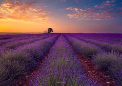 L'alba in provenza