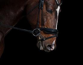 horse-2047008_1920.jpg