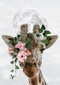portrait girafe