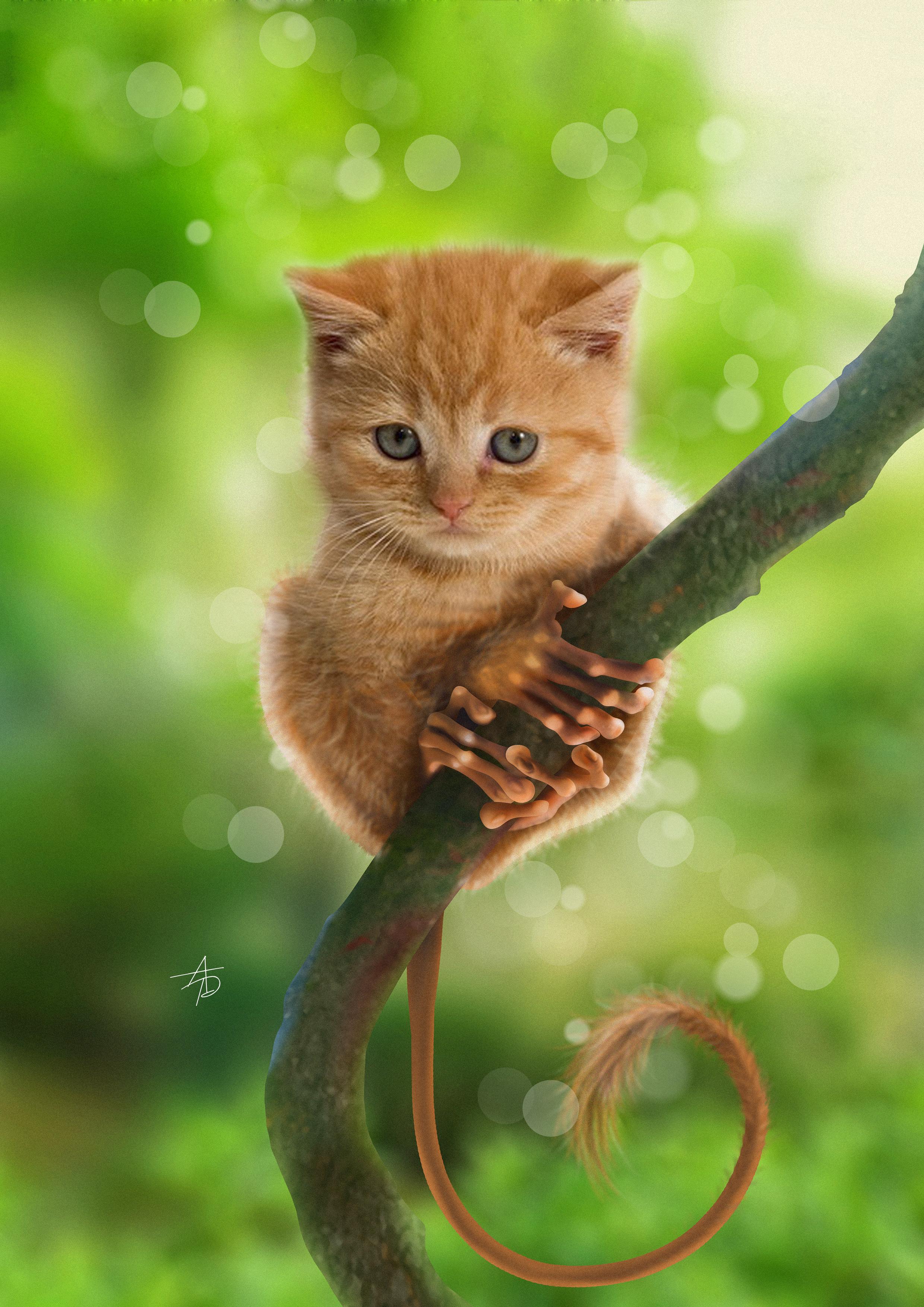 moncat