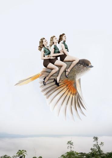 A vol d'oiseau
