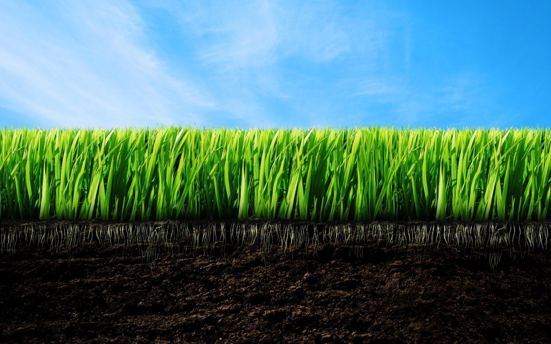 Aeration & Seeding