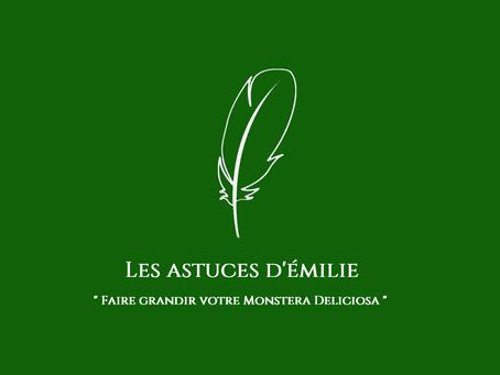 Monstera Deliciosa, la plante verte jungle par excellence