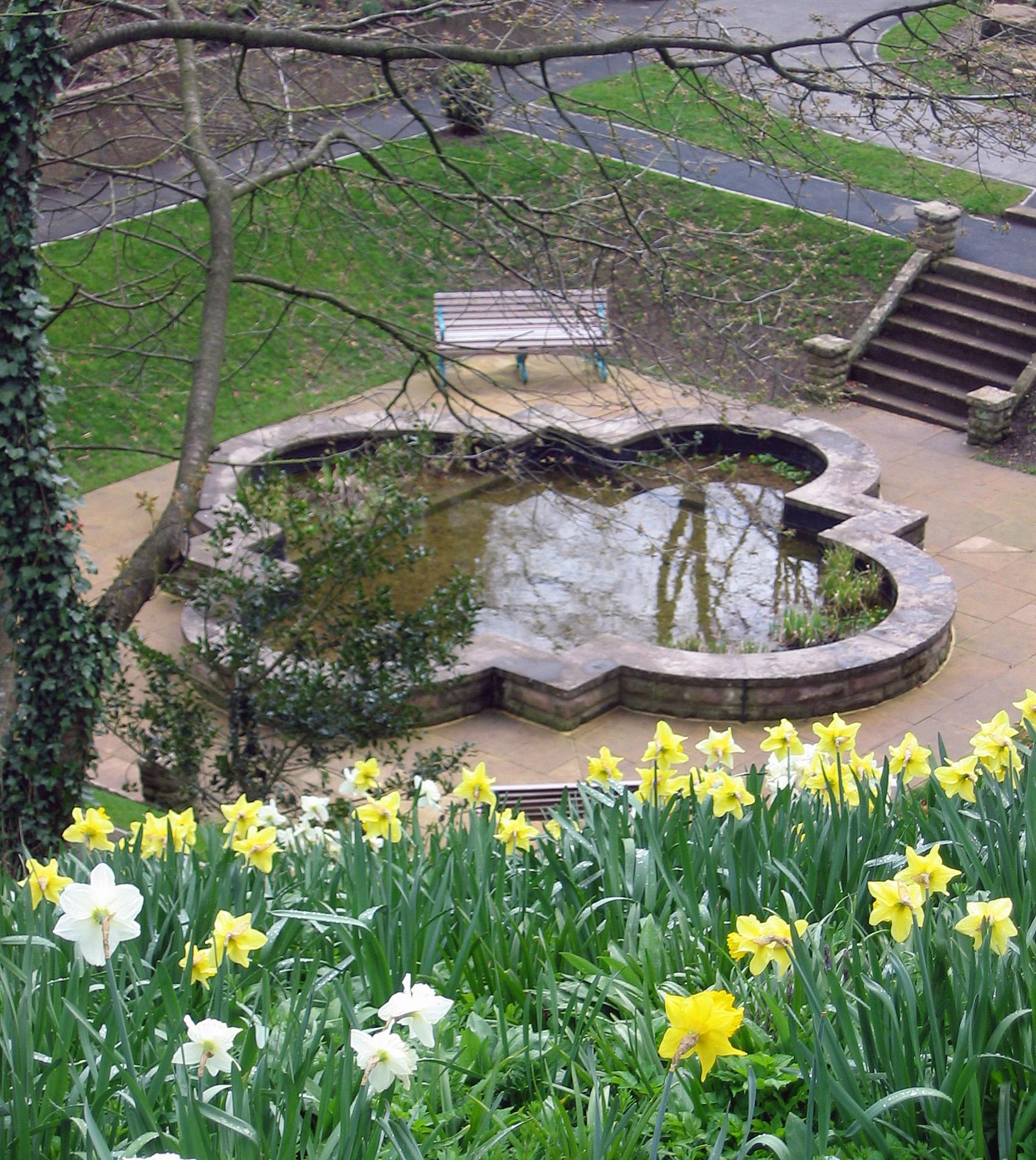 Pond daffs.jpg