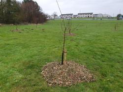 Community orchard bark
