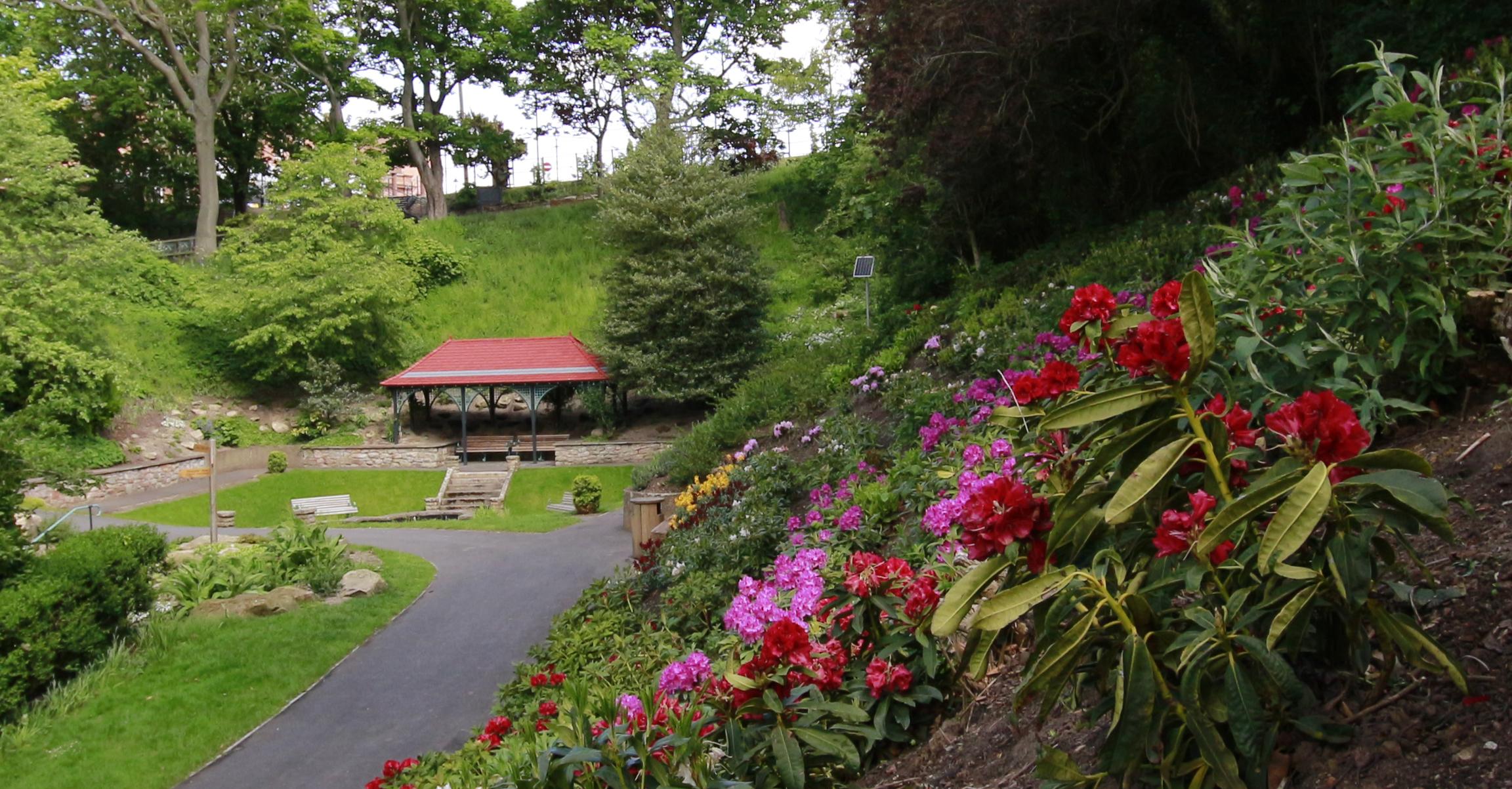 _MG_4493 Castle Vale Flowers