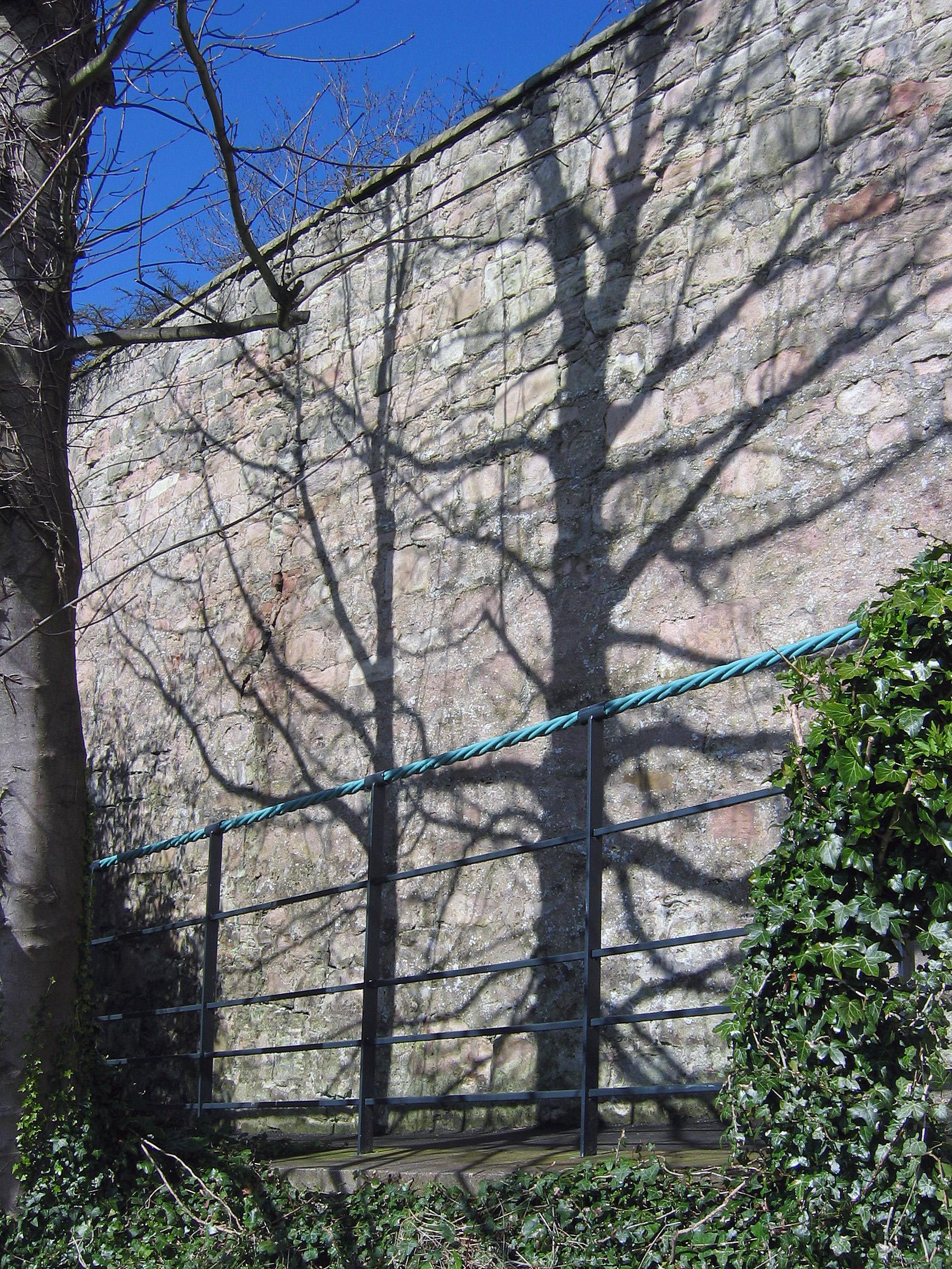 Spring shadow.jpg