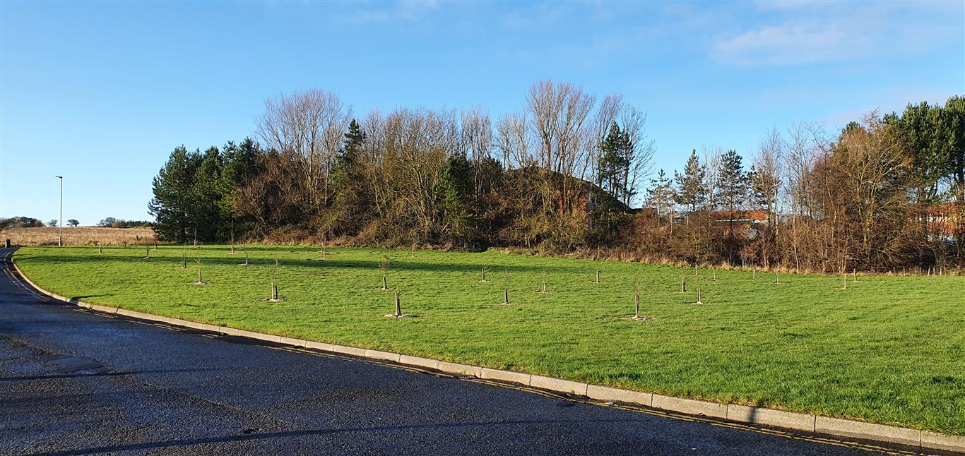 Community orchard overview