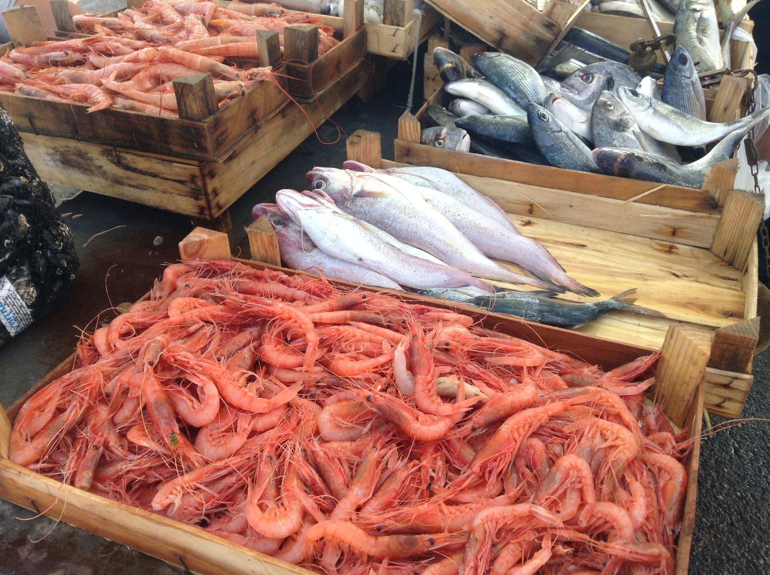 朝の漁村にて