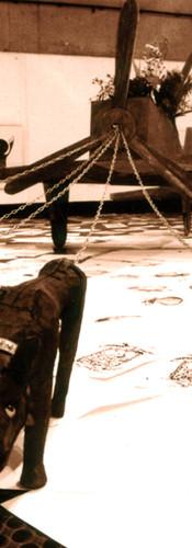 198803戦闘機を引くやせ犬.JPG