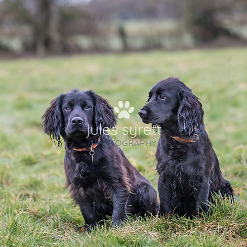 Purbeck Gundog School