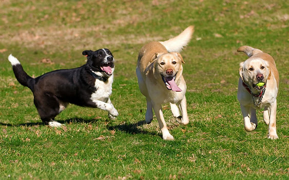 dogs10.jpg