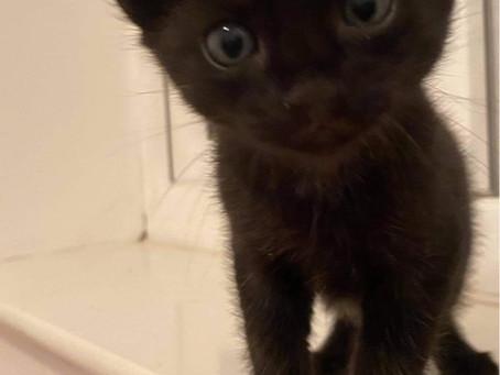Hi I'm Binxy!