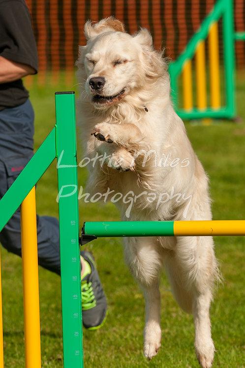 Dartmoor DTS Merton Show-41