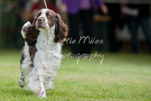 Paignton Dog Show-13