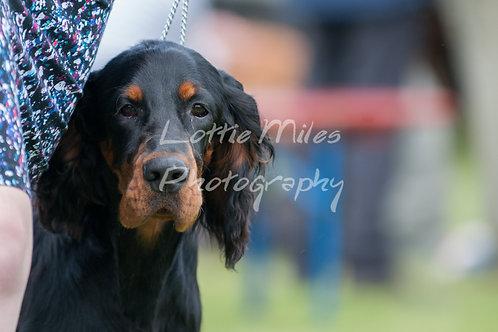 Paignton Dog Show-11