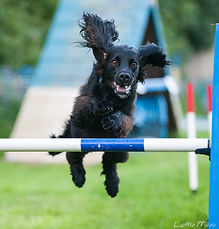 Dog Agility Photos