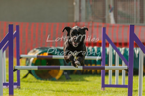 Dartmoor DTS Merton Show-20