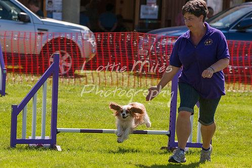Dartmoor DTS Merton Show-122