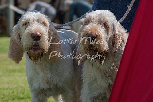 Paignton Dog Show-1