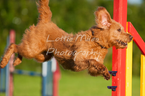BDTS Thursday Agility-8