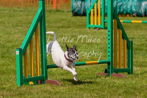Dartmoor DTS Merton Show-99