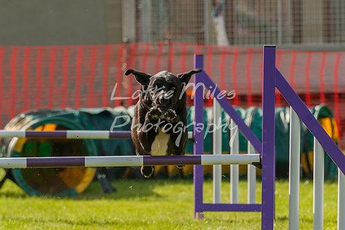 Dartmoor DTS Merton Show-21