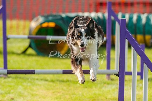 Dartmoor DTS Merton Show-9