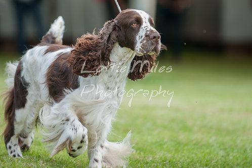 Paignton Dog Show-14
