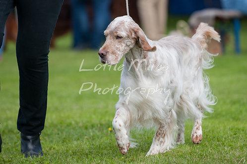 Paignton Dog Show-8