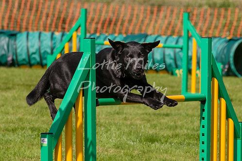 Dartmoor DTS Merton Show-83