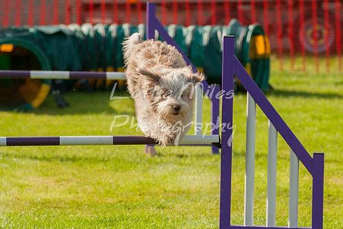 Dartmoor DTS Merton Show-13