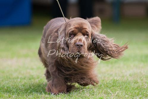 Paignton Dog Show-18