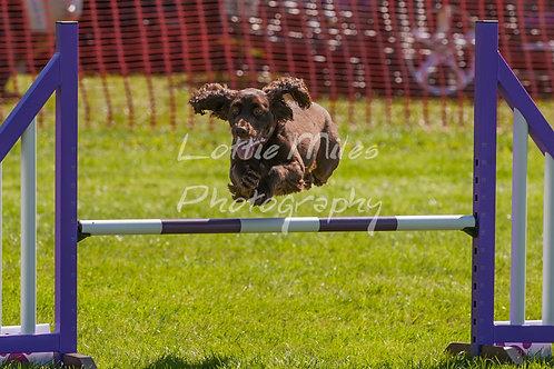 Dartmoor DTS Merton Show-131