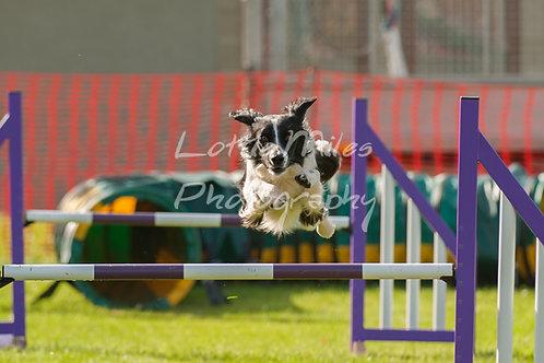 Dartmoor DTS Merton Show-16
