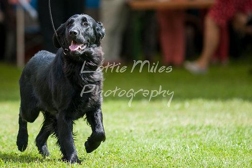 Paignton Dog Show-10