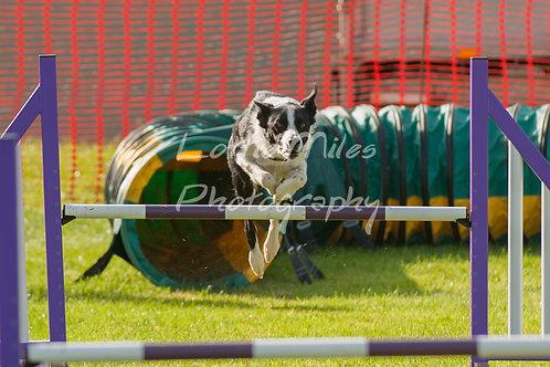Dartmoor DTS Merton Show-14