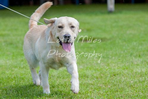 Paignton Dog Show-6